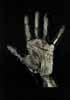 sarah's palm