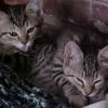 pr_kitties userpic