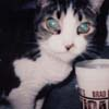 sabrina_the_cat userpic