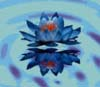 lotusbluete userpic