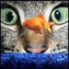 cat eyes fish