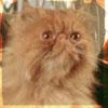 hermionescat userpic