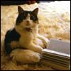 Literate kitty