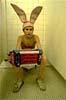 queer_rabbit userpic