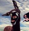 donkeyjon userpic