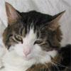 mew_kitties userpic