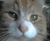 sunlove userpic