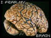 braaiiins