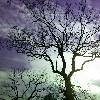 clare_bare userpic