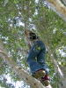 emer_the_lemur userpic