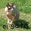 eeen userpic