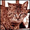 ohalnik userpic