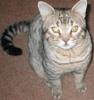 defect_kitty userpic