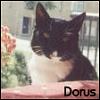 dorus userpic