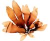dulaman (palmaria palmata)