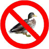 not_a_duck userpic