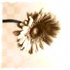 amylaurene userpic