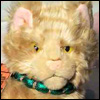 norris_kitty userpic