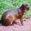 violetspecter userpic