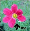 suzihasasilentq userpic