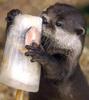 otterpop userpic