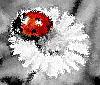 bubomara userpic
