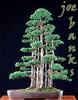 joebanks userpic