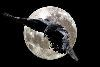 bright_raven userpic