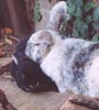 Trepkos: Bunnies