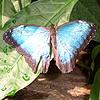 beautiful, butterfly