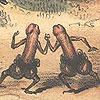 penii icon_monkey