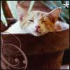 albizia userpic