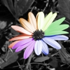 chait userpic