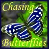 Cheesehead in Paradise: Butterflies