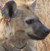 Yeena Pride upright w/necklace