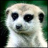 meerkat299 userpic