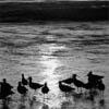 ocean birds at Redondo beach