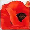 poppysomniferum userpic