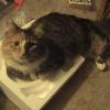 powerpuff_cat userpic