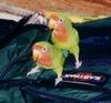 the_lovebirds userpic