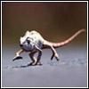 funny chameleon