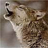 Howling photo