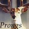 prongs_ma userpic