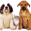 dogs n cats