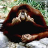 monkey_fister userpic