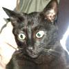 dj_cat userpic