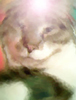 ravncat userpic