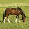 Horse Horses Murphy