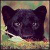 joshuapanther userpic