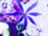 sugarswirl userpic